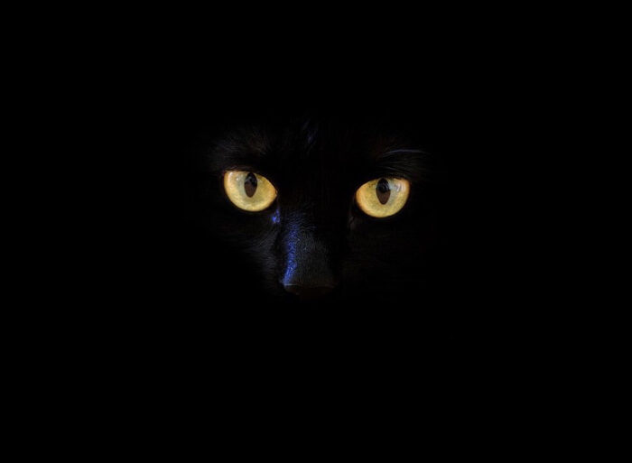 Black as the Night: The Raven & the Cat